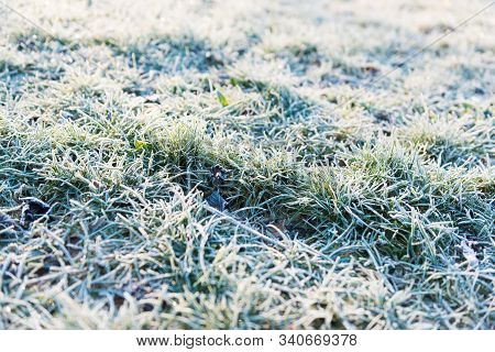 Wintery Texture Of Grass And Ice In A Sunny Day