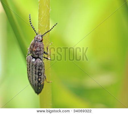 big bug on green background