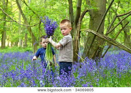 Boys Plauing In The Bluebell Woods