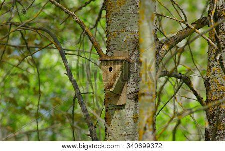 Bird Box Disguised With Natural Habitat In Garden