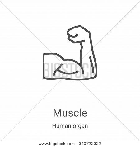 muscle icon isolated on white background from human organ collection. muscle icon trendy and modern