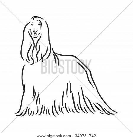 Vector Sketch Of The Black Dog Afghan Hound Breed