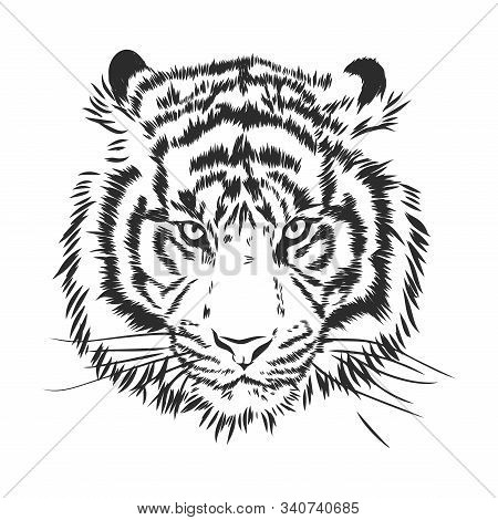 Angry Tiger Head Silhouette, Vector Sketch Illustration