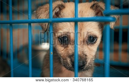 Sad Puppy In Shelter Behind Fence Waiting To Be Rescued And Adopted To New Home. Shelter For Animals