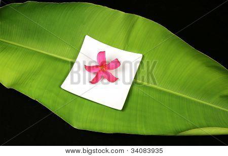 Tropical Plumeria Flower On A Large Green Leaf