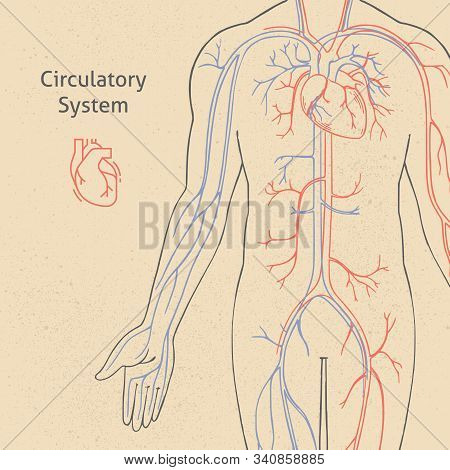 Vector Banner Template With Human Circulatory System Drawn In Retro Style With Background. The Illus