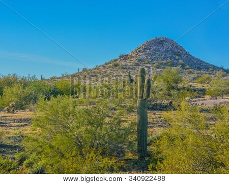 Discovery Trail In The Sonora Desert. Peoria, Maricopa County, Arizona Usa