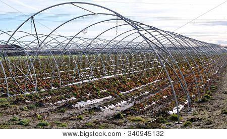 Steel Skeleton Of An Hoop Greenhouse On Strawberry Field In Winter