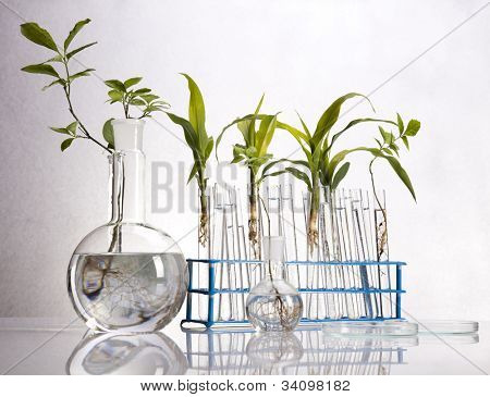 Experimenting with flora in laboratory