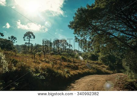 Dirt Pathway On Wooded Landscape And Sunlight In Aparados Da Serra National Park, Near Cambara Do Su