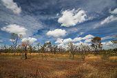 Landscape of Kakadu National Park in  Australia poster
