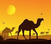 caravan of camels in Africa, vector image design poster
