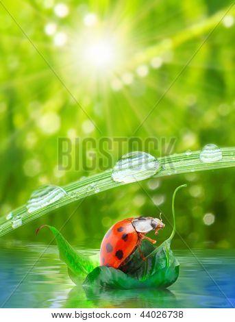 poster of Little ladybug floating on the leaf. Funny traveling concept.