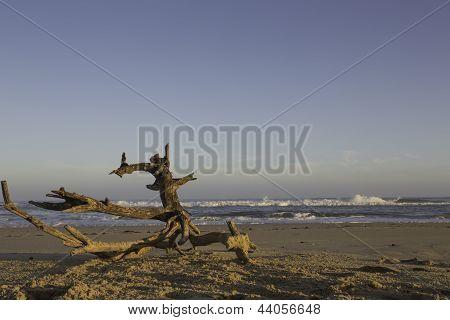 Driftwood On A Deserted Beach