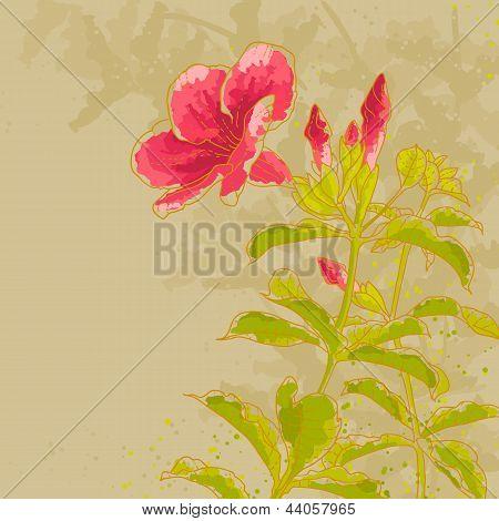 Allamanda Flower On Toned Background
