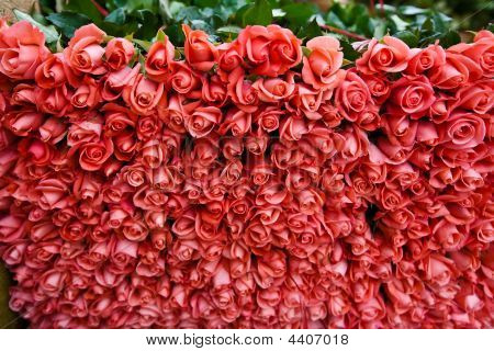 Close up of dozens of pink roses at at nursery ready for market poster