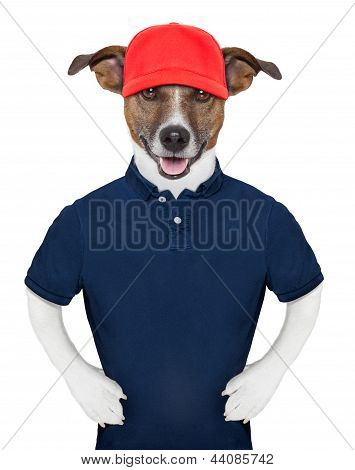 Service dog wearing a blue polo and a red cap poster