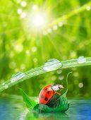 Little ladybug floating on the leaf. Funny traveling concept. poster