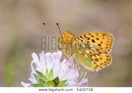 Small Orange Butterfly And Pink Flower