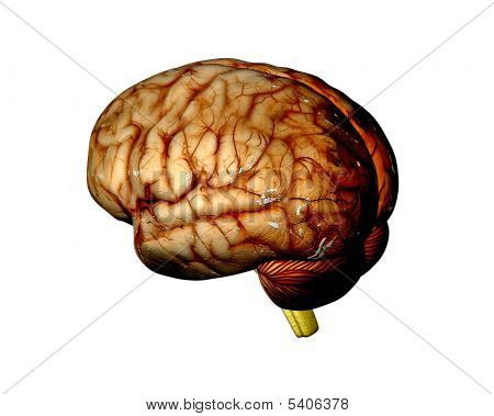 Brain 2 Cburn