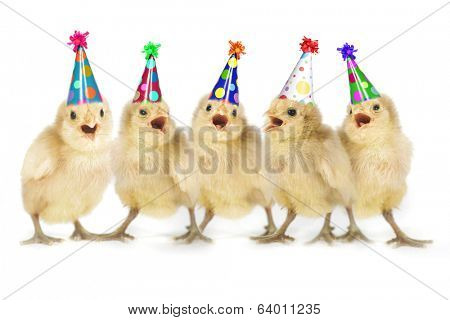Birthday Yellow Baby Chicks Lined Up