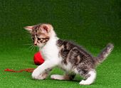 Cute kitten playing red clew of thread on artificial green grass poster