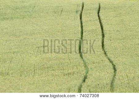 abstract view of wheat green field with tractor trace poster