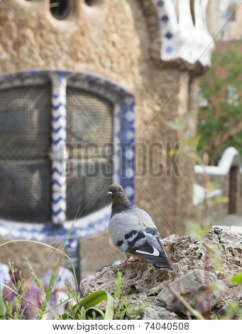 Dove In The Park Guell