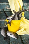 A bucket of fresh fish on wooden background poster