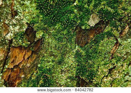 Tree bark with moss