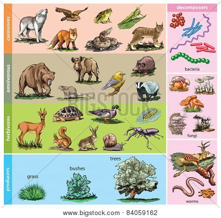 Forst animals