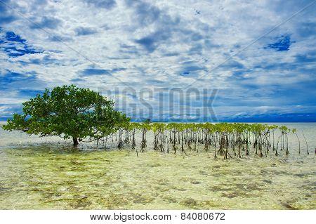 Tree Growing In The Sea
