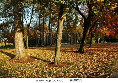 Herbst-Bäume