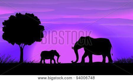 Sihouette elephants in the field