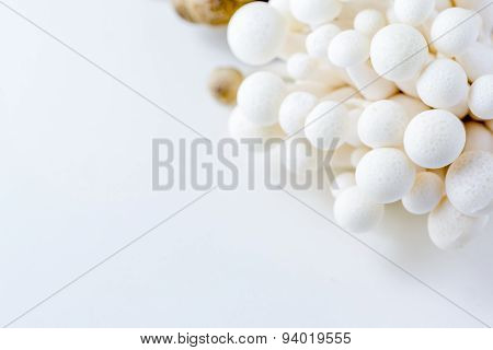 Bunch Of White Bunapi Beech Mushrooms Or Shimeji Mushrooms