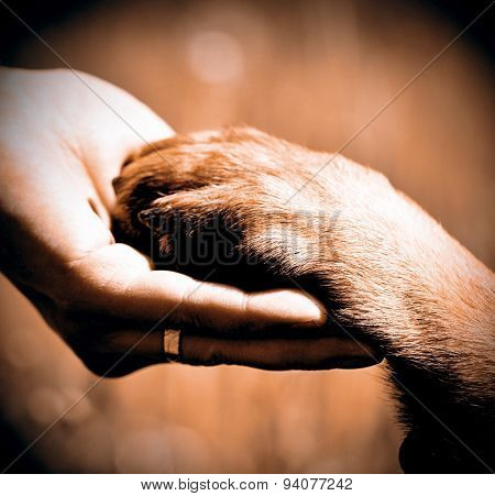 Dog´s Paw And Man´s Hand