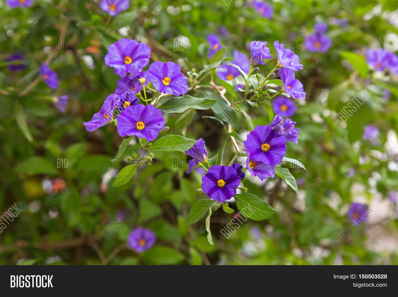 Closeup Purple Flower Image Photo Free Trial Bigstock