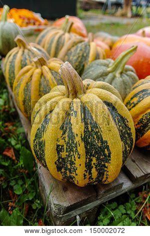 Diverse assortment of colorful pumpkins. Autumn harvest.
