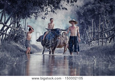 Children riding water buffalo on his father laughed happily.
