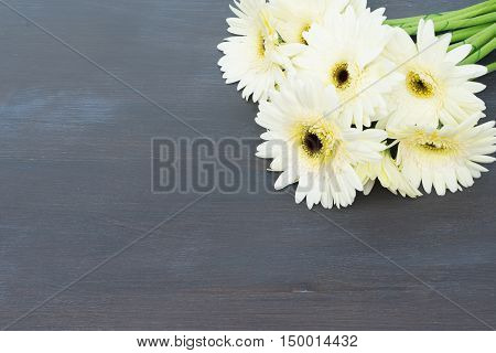 Beige fresh gerbera flowers on dark wooden table close up