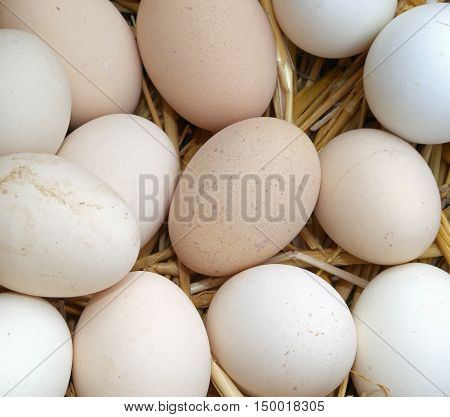 Many Fresh Eggs Of Hen