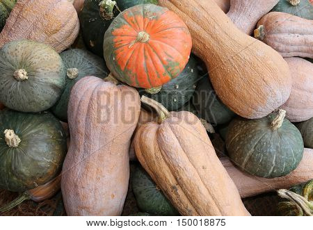 Gourds For Sale In Greengrocers In Autumn