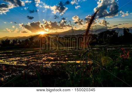 sun sunset sky blue flower green light cornfield