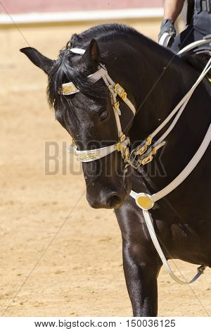 beautiful horse of pure breed docile and obedient