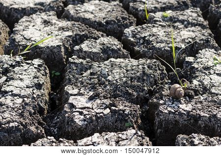 Textured Background Of Dry Cracked Earth Surface