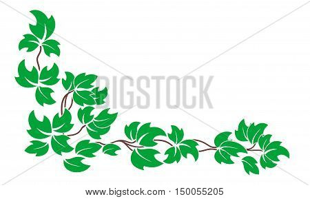 Vector floral pattern. A branch of the vine with green leaves isolated on white background.