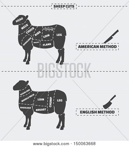Cuts of lamb meat. American and english method. Vector illustration.