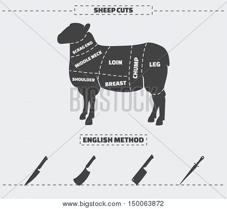 Cuts of lamb meat and knives. Vector illustration.