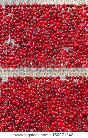 Cranberries (up view) on the crystal trays