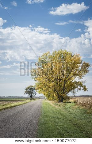 vertical image of a big tree with yellow leaves sitting beside a dirt country road under a blue sky with white clouds in the fall time.